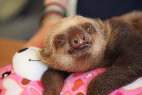 Print-Baby Sloth